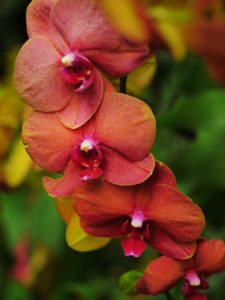 NYBG Releases Virtual Tour of The Orchid Show